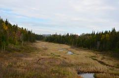 Adirondack-Marschland-Wiesenansicht Stockbilder