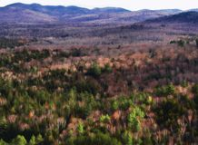 Adirondack mountains and forest Stock Photography