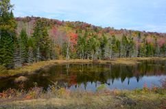 Adirondack pond and forest during autumn season Stock Photos
