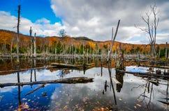Adirondack-Teich Stockbilder