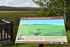 Adirondack  tupper lake wetland ecosystem stand Royalty Free Stock Images