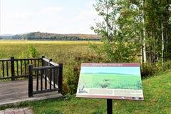 Adirondack  tupper lake wetland ecosystem stand Stock Image