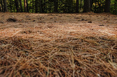 Adirondacks Forest Path. Adirondacks in New York State Stock Photo