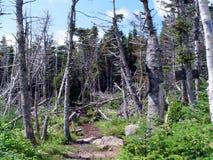 Adirondacks. Gothics trail in the Adirondacks, high peaks region, New York State Stock Images