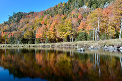 Adirondacks-Herbstlaub, New York Stockbild