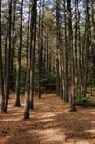 Adirondacks-Waldpfad Lizenzfreies Stockbild
