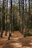 adirondacksskogbana Royaltyfri Bild