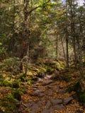 Adirondackssleep in de Herfst royalty-vrije stock afbeeldingen