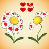 Adivinación en la margarita del amor con los corazones Fotografía de archivo