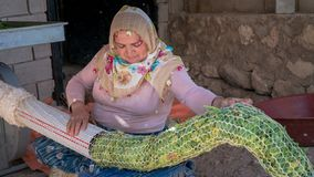 Turkish local woman gathering tobocco leaves with a machine later to leave them to dry, Turkey royalty free stock photography