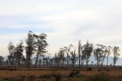 Adjarian Landschaft Lizenzfreies Stockfoto