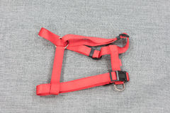 Adjustable harness for dog Stock Photography