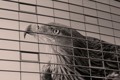 Adler über Fenstern Lizenzfreie Stockfotografie