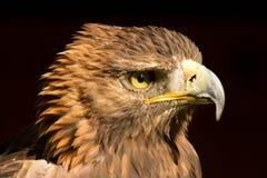 Adler Fotografia Stock