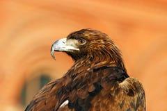 Adler #4 Lizenzfreies Stockbild
