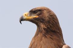 Adler auf der Uhr Lizenzfreie Stockfotos