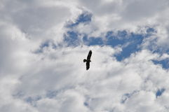 Adler auf Himmel Lizenzfreie Stockfotos