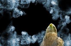 Adler auf Rauchhintergrundnahaufnahme Lizenzfreie Stockfotos