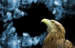 Adler auf Rauchhintergrundnahaufnahme Stockbilder