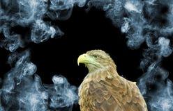 Adler auf Rauchhintergrundnahaufnahme Lizenzfreie Stockfotografie
