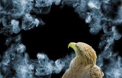 Adler auf Rauchhintergrundnahaufnahme Stockfotografie