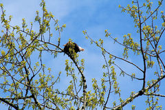 Adler Benennen Stockfoto