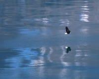 Adler, der über Wasser ansteigt Lizenzfreies Stockbild