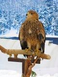 Adler, der auf einem Support über Winterhintergrund stationiert Lizenzfreies Stockbild