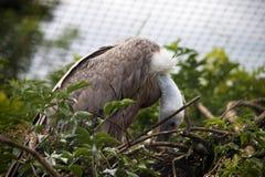 Adler in der Baumoberseite Lizenzfreie Stockfotos
