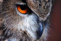 Adler-Eulen-Auge Lizenzfreie Stockbilder