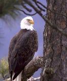 Adler gestaltet durch Flora. Stockfotografie