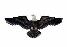 Adler getrennt gegen weißen Hintergrund Lizenzfreie Stockfotografie