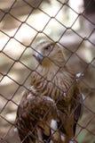 Adler hinter Stäben Lizenzfreie Stockfotos