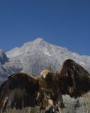 Adler am Jade-Drache-Schnee-Berg Stockfotos