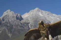 Adler am Jade-Drache-Schnee-Berg Lizenzfreies Stockfoto