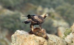Adler mit einem Eber auf dem Felsen Lizenzfreies Stockfoto
