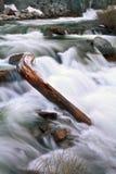 Adler-Nebenfluss Stockbild