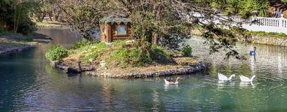 ADLER, RÚSSIA 17 de março de 2018: Cisnes no parque de culturas do sul Imagem de Stock