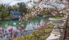 ADLER, RÚSSIA - 17 de março de 2018: Florescência em culturas do sul do parque Imagem de Stock