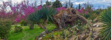 ADLER, RUSLAND - Maart 17, 2018: Cactussen in park Zuidelijke culturen Stock Afbeeldingen
