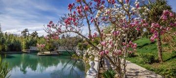 ADLER, RUSLAND - Maart 17, 2018: Het bloeien in park Zuidelijke culturen Royalty-vrije Stock Fotografie