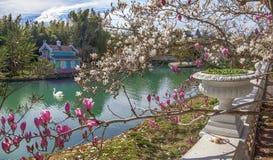 ADLER RYSSLAND - mars 17, 2018: Att blomma in parkerar sydliga kulturer Fotografering för Bildbyråer