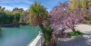 ADLER RYSSLAND - mars 17, 2018: Att blomma in parkerar sydliga kulturer Arkivbilder