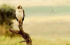 Adler in seinem Wachturm Lizenzfreie Stockfotos