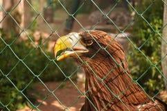 Adler, sitzt hinter einem Gitter Lizenzfreie Stockfotografie