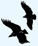 Adler steigt im Himmel an. Lizenzfreie Stockbilder