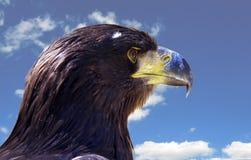 Adler und blauer Himmel Lizenzfreies Stockbild