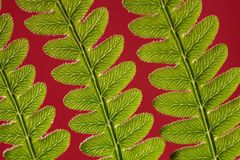 Adlerfarn Fern Leaf Stockfotos