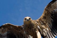 Adlerflugwesen über Himmel Lizenzfreie Stockfotos