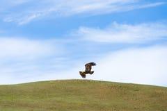Adlerflugwesen über Steppe Lizenzfreie Stockfotografie